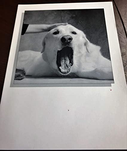 Buy One Get 1 Free Funny Dog Birthday Card Ten DOLLOAR Value