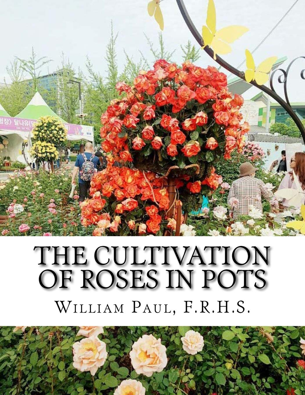 The Cultivation Of Roses In Pots Or Growing Roses In Containers