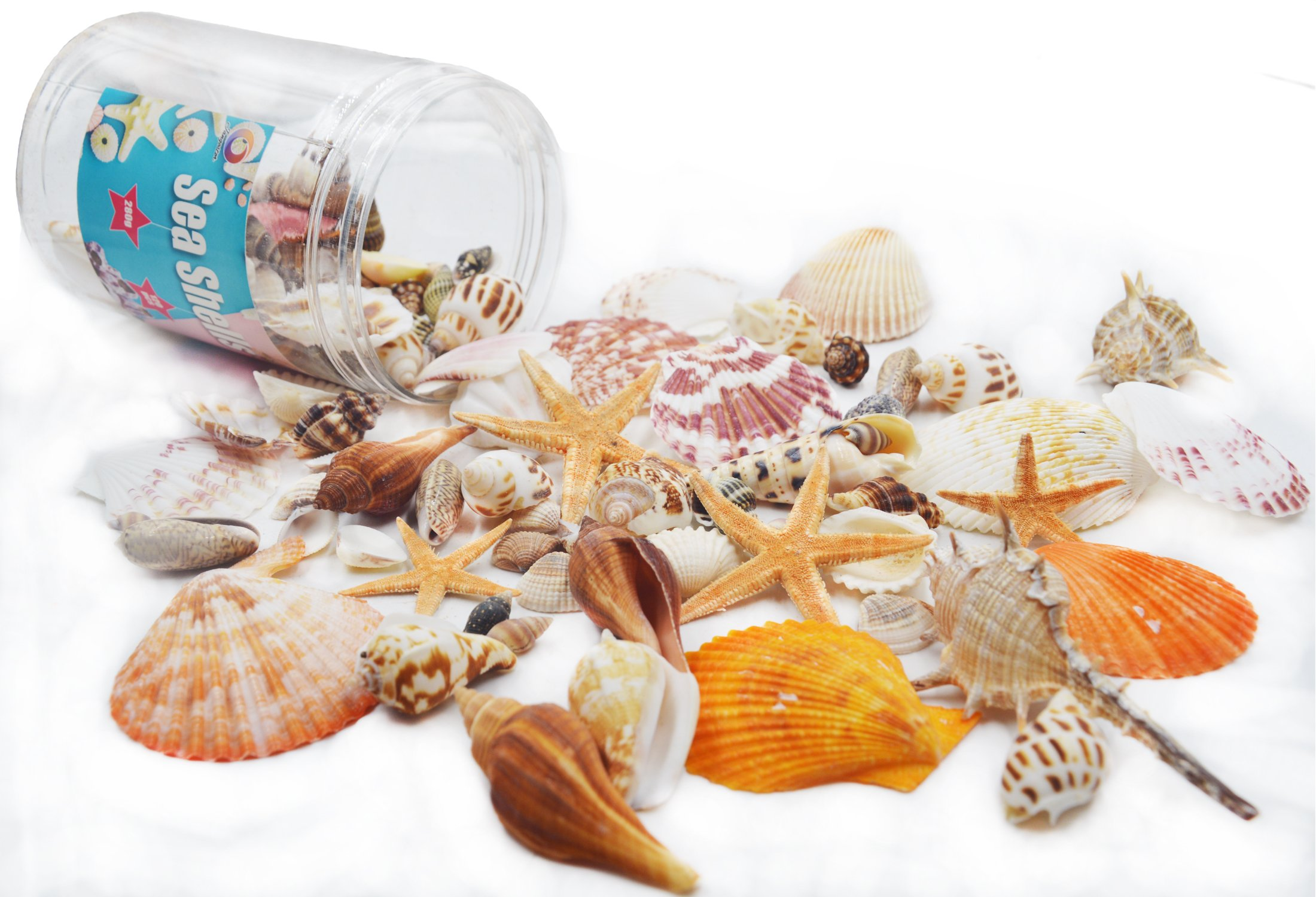 100PCS Sea Shells Bottle Mixed Ocean Beach Seashells-Natural Colorful Seashells Starfish Perfect for Vase Fillers,Wedding Decor Beach Theme Party , Home Decorations,DIY Crafts, Fish Tank,Candle Making