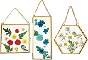 Anav's Set of 3 Double Glass Frame for Pressed Flowers -for Sonogram, Flower, Leaf, Hanging Pressed Glass Geometric Hexagon Wall Decor and Gold Square Picture Frame 4X4, 6X6 Floating Picture Frame