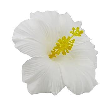 Amazoncom Bonitagirl Hawaiian Hibiscus Flower Hair Clip White