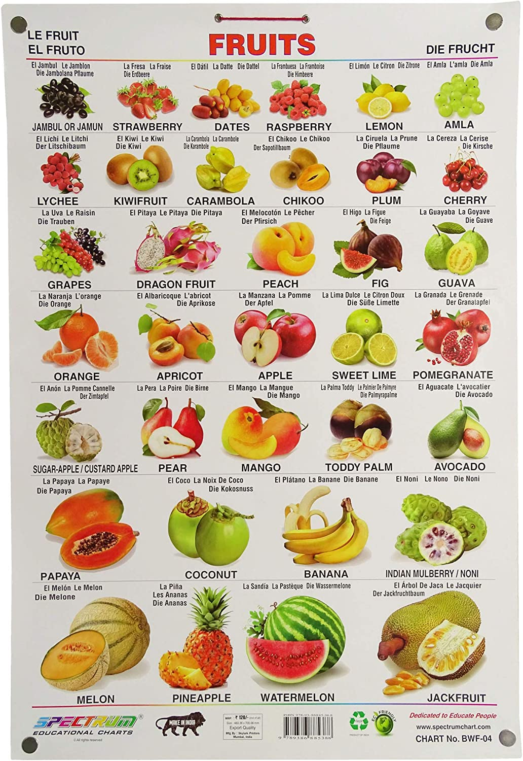 Amazon Com Spectrum Pre School Kids Learning Laminated Educational Fruits Name Wall Chart Industrial Scientific