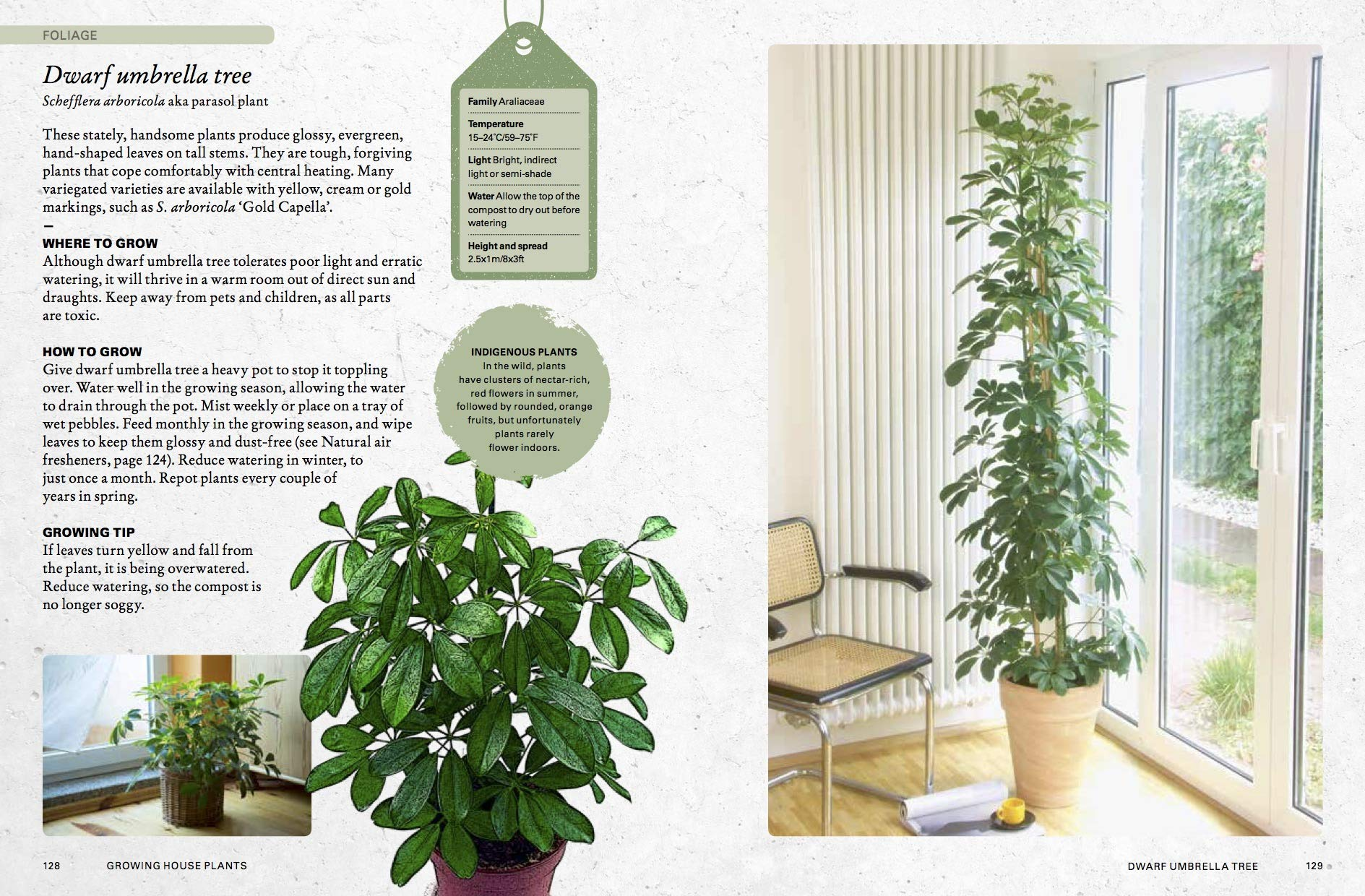 The Kew Gardener's Guide to Growing House Plants: The art and ... Orted Foliage House Plants on