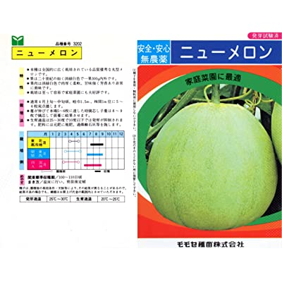40+ Japanese New Melon (LMS) Seeds; 新瓜; ニューメロン; 日本甜寶香瓜 : Garden & Outdoor