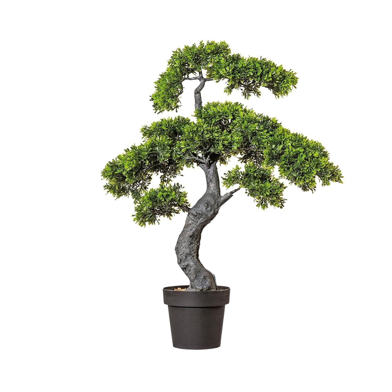 Bonsai TEEBLATT H 90cm 90cm 90cm - (1917802-50) f951a7