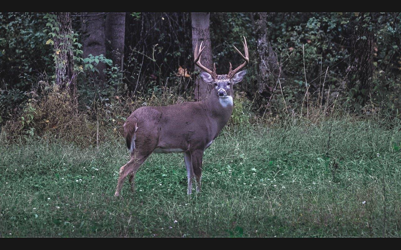 salt-licks-for-deer-per-acre