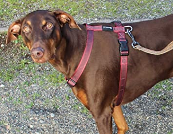 81MuGWpvm%2BL._SX355_ amazon com gladton extra strong dog harness for medium large dogs