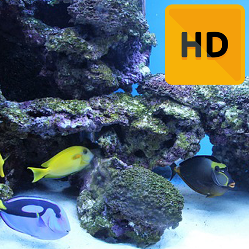 commercial aquariums - 6