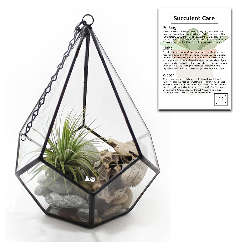Hanging Or Standalone Geometric Teardrop Glass Terrarium For