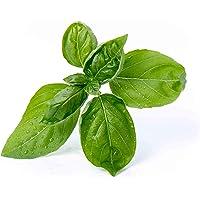 Véritable Lingot® - Recarga para Jardín Interno autónomo