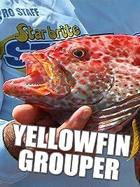 Clip: Yellowfin Grouper