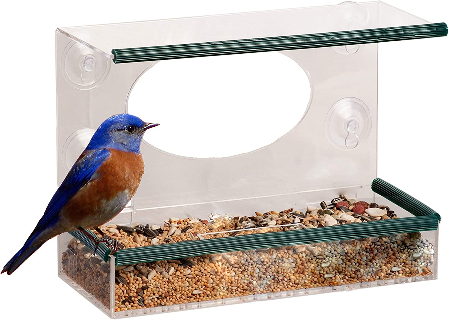 Bird Feeder Glass Window Clear Viewing Seed Peanut Hanging Suction C