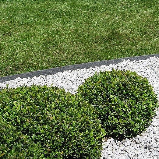 ecolat Césped borde césped banda Cercado para Bancal 11 x 0, 7 cm 25 m, gris: Amazon.es: Jardín