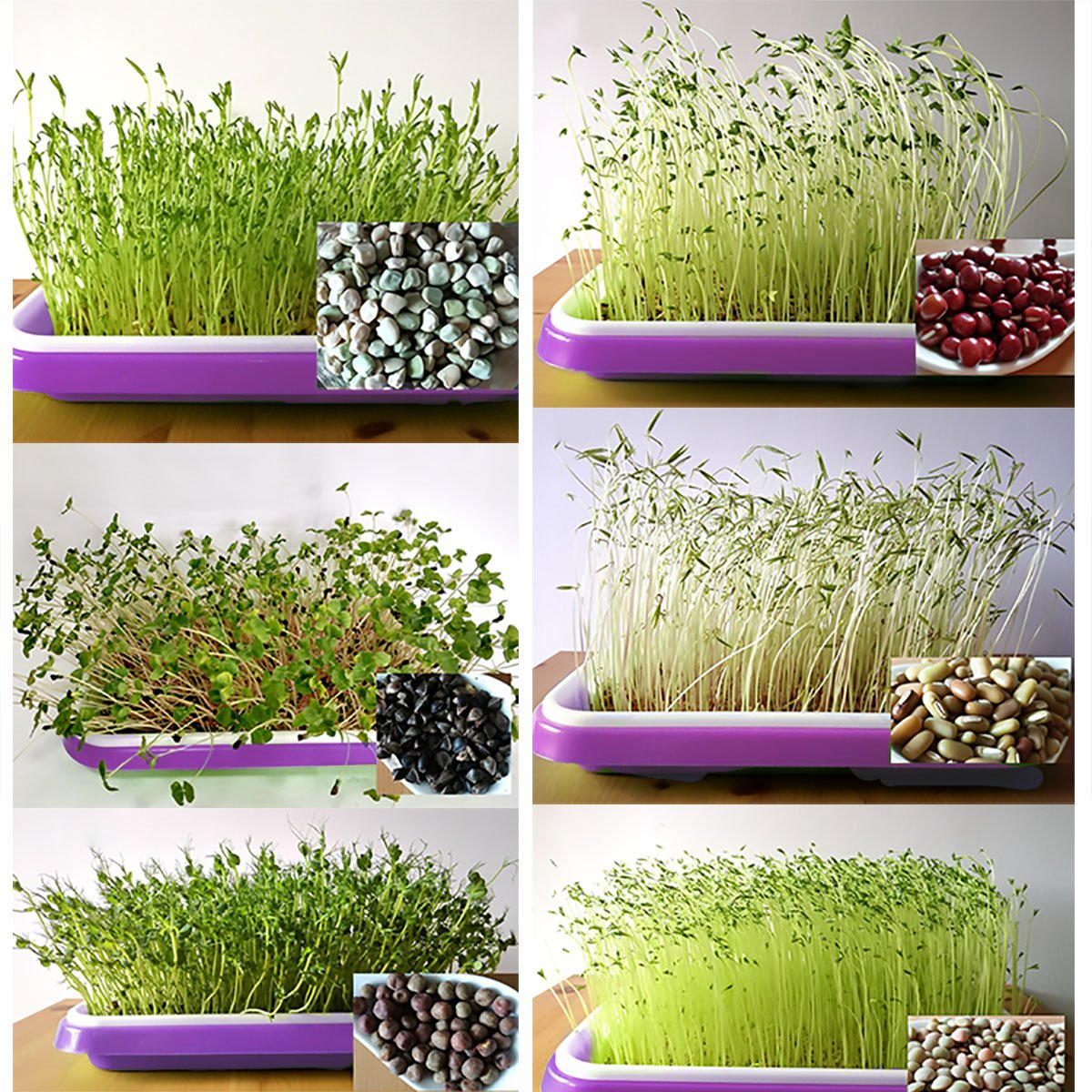 CHICTRY Seed Sprouter Soilless Culture Bean Dish Seedling Bud Sprouts Nursery Pot Double-Layer Big Capacity Hydroponics Wheat Grass Grower Implant Tray Purple One Size