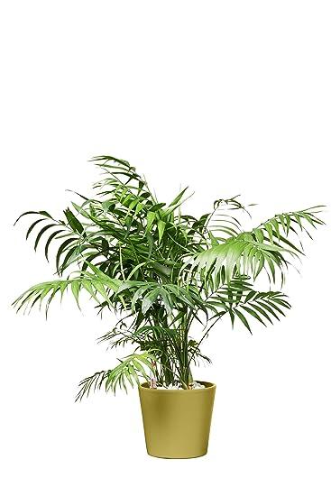 Buropflanze grun for Hydrokultur buro