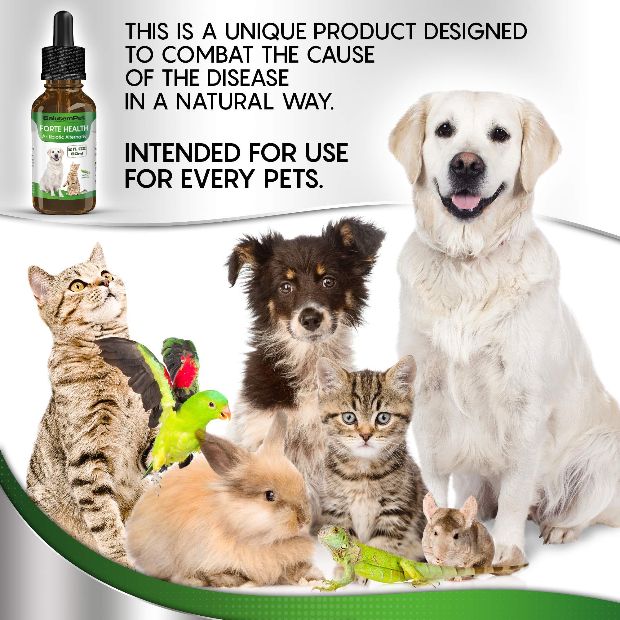 Natural ANTIBIOTICS For Dogs / ANTIBIOTICS Alternative For