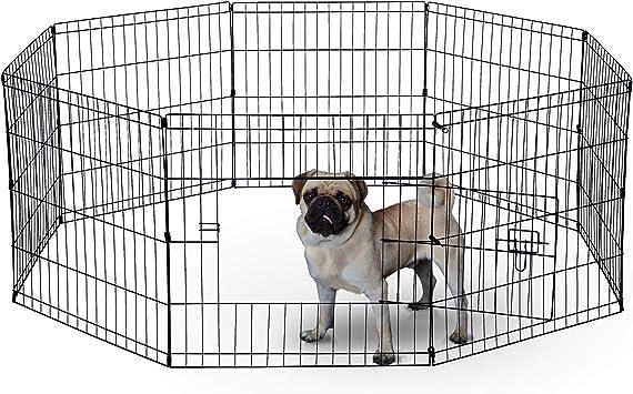 Amazon.com: Pluma de ejercicio para perros, para perros ...