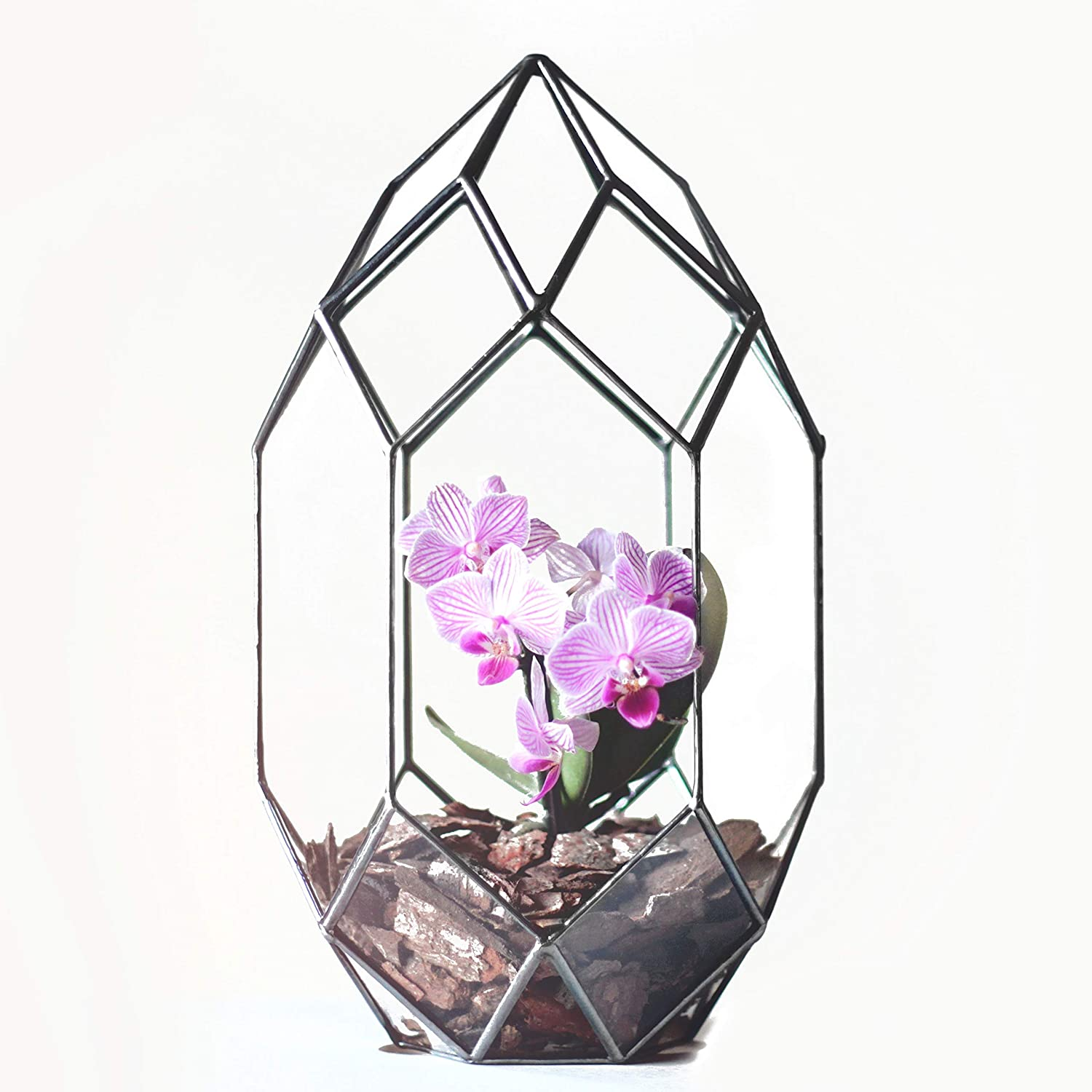 Waen Terrarium Collection Large Glass Geometric Orchid Planter (Copper, Silver, Black)
