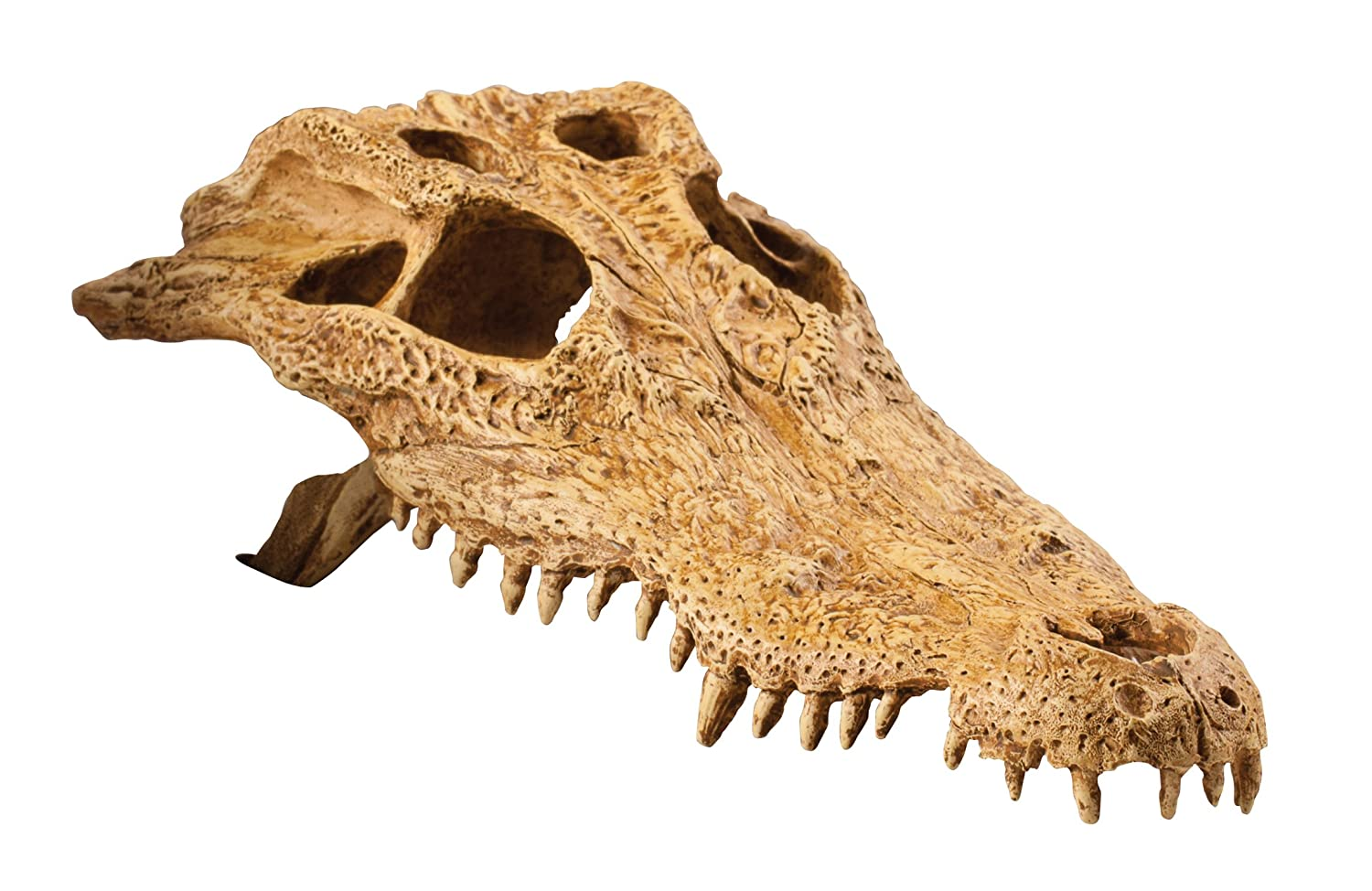 Exo Terra Crocodile Skull Terrarium D Pet Terrariums Snake Skeleton Diagram The At Very Supplies