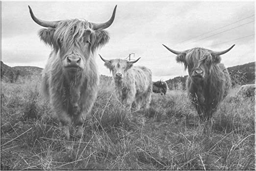 Highland Cow Portrait on Framed Canvas Photo Print Black and White Wall Hanging
