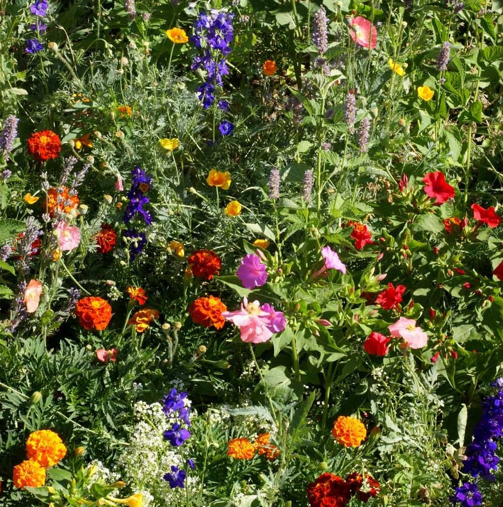 Outsidepride Deer Proof Wildflower Seed Mix - 5 LB by Outsidepride