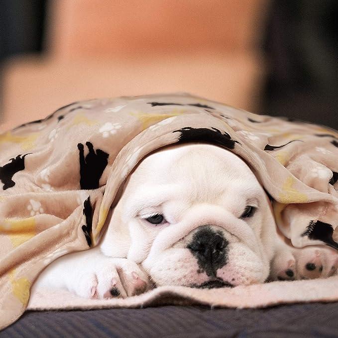Manta para perro, acogedora manta para sofá, sofá, suelo, de franela esponjosa, lavable y cálida para animales pequeños Medimu, gato, cachorro, gatito, 70 x 39 cm, color caqui: Amazon.es: Productos para mascotas
