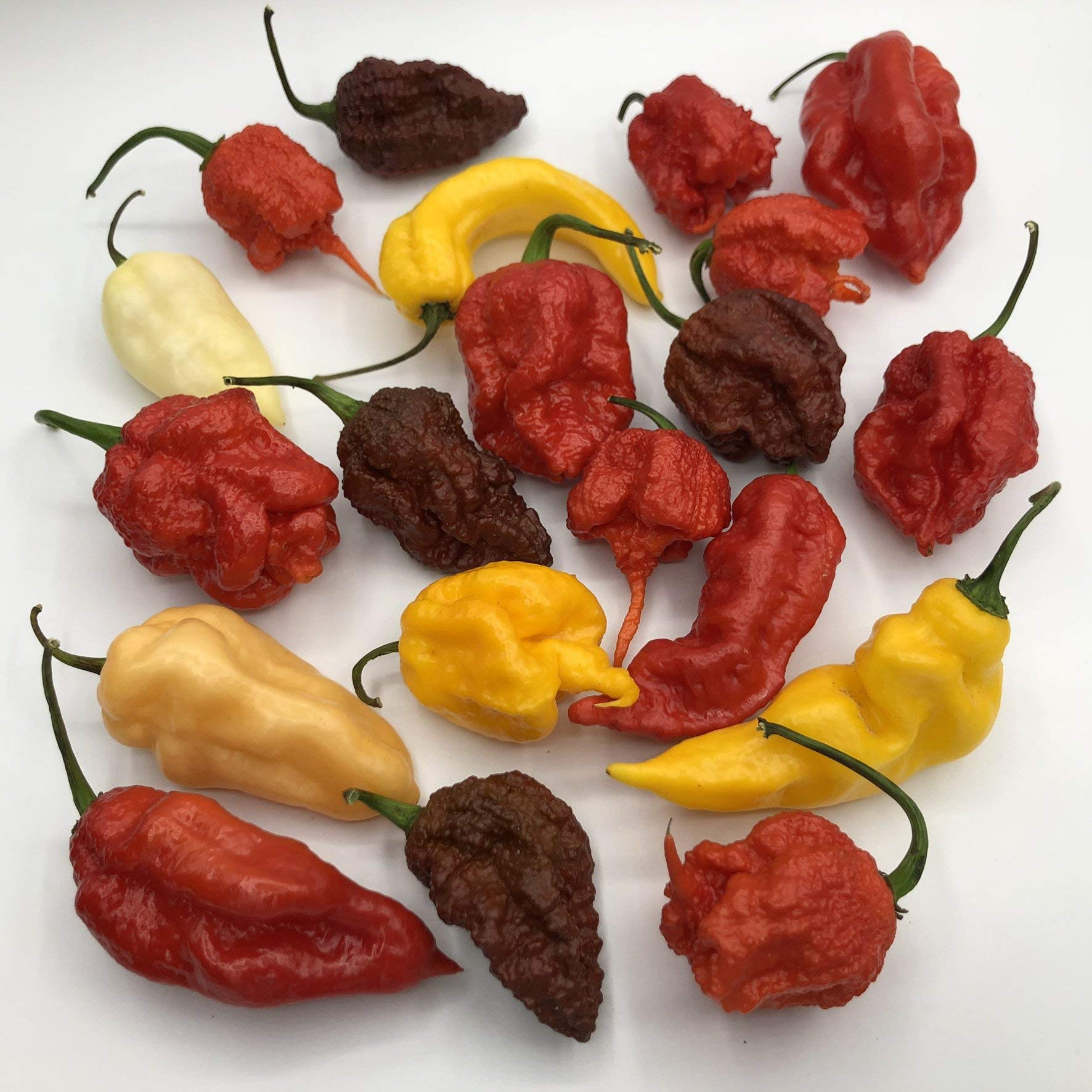 Mixed Box of Fresh Super-Hot Peppers - from Bohica Pepper Hut: Reapers, Ghost, Scorpion, ETC. by Bohica Pepper Hut