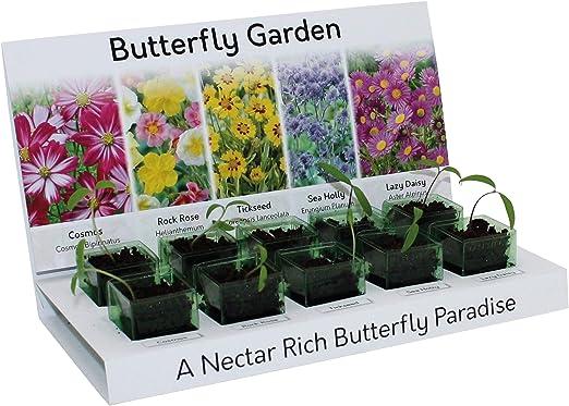 Flores de jardín atractoras de mariposa, cultivar tu propio kit ...