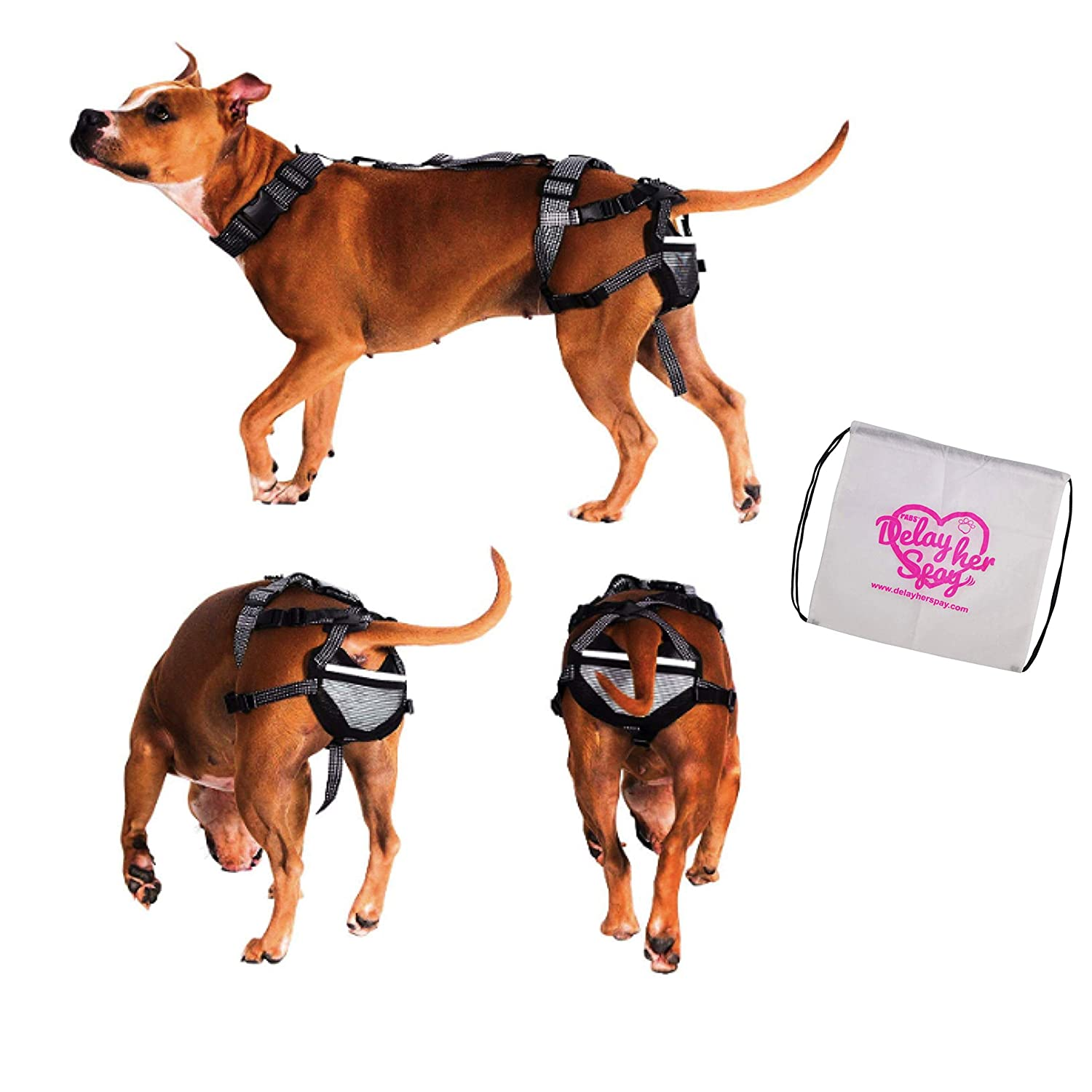 Pet Anti-Breeding System Chastity Belt for Dogs (PABS), Humane Birth Control Predects Against Breeding, 2X-Large