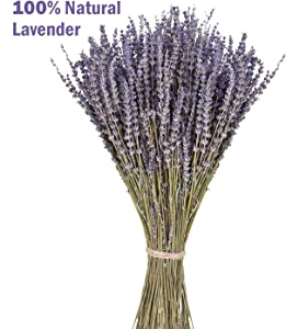 June Fox Dried Lavender Flowers 100% Natural DriedLavenderBunches for Home Decoration, Home Fragrance, Handmade Soap Flower, 270-300 Stems