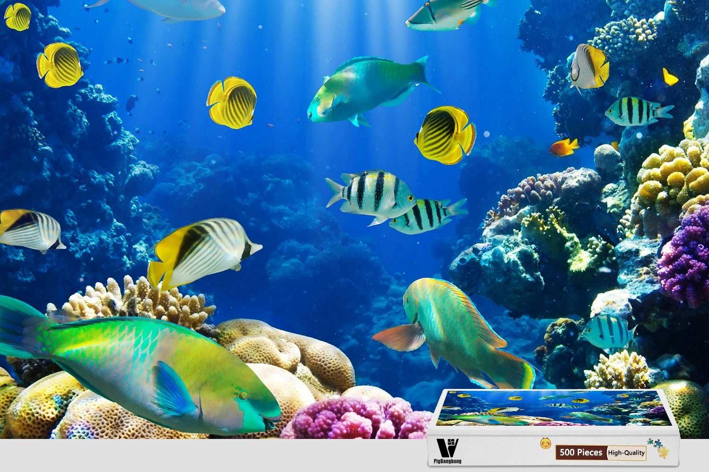 【日本未発売】 pigbangbang、20.6 X Sea 15.1インチ –、プレミアム木製Unique Present toファミリNice壁画ポスター – – Underwater Fishes Tropical Ocean Sea Reef – 300ピースジグソーパズル B07FLCYBGM, 靴のオフサイド:49b5ff79 --- 4x4.lt