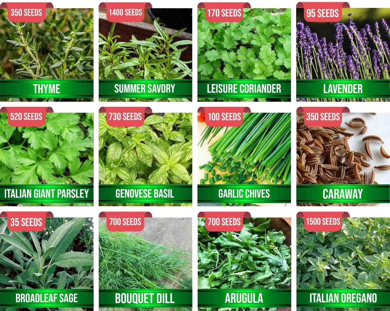 Assorted 12 Popular Herb Seeds USA Origins, 5500+ Seeds Survival Garden Kit, Easy to Grow Herb Seeds for Planting, 100% Non-GMO Heirloom Collection for Indoor Outdoor Garden Culinary Medicinal