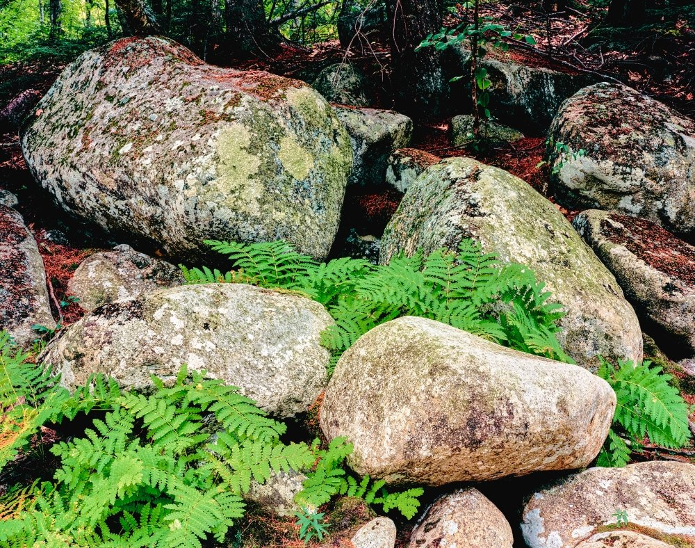 28 x 22 Fern leaves and rock in a forest Swift River White Mountain National Forest New Hampshire USA Poster Print by Panoramic Images