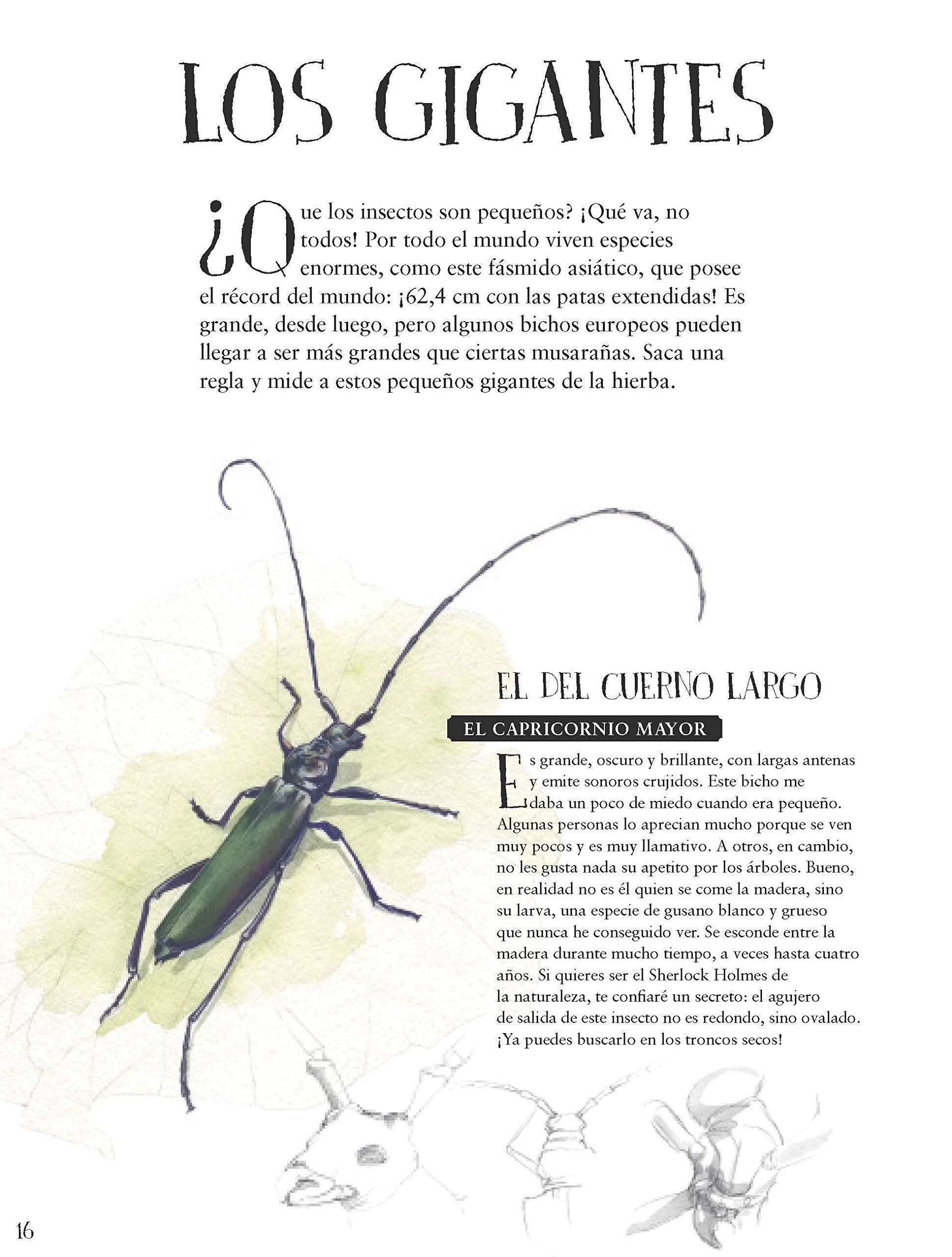 Museo vivo de los insectos: 17 (HARPERKIDS): Amazon.es: FRANÇOIS LASSERRE, Anne de Angelis, Isabel González-Gallarza: Libros