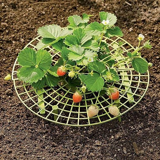 EFINNY Fresa Soporta 5 Unids/pack Soportes para el Cultivo de ...