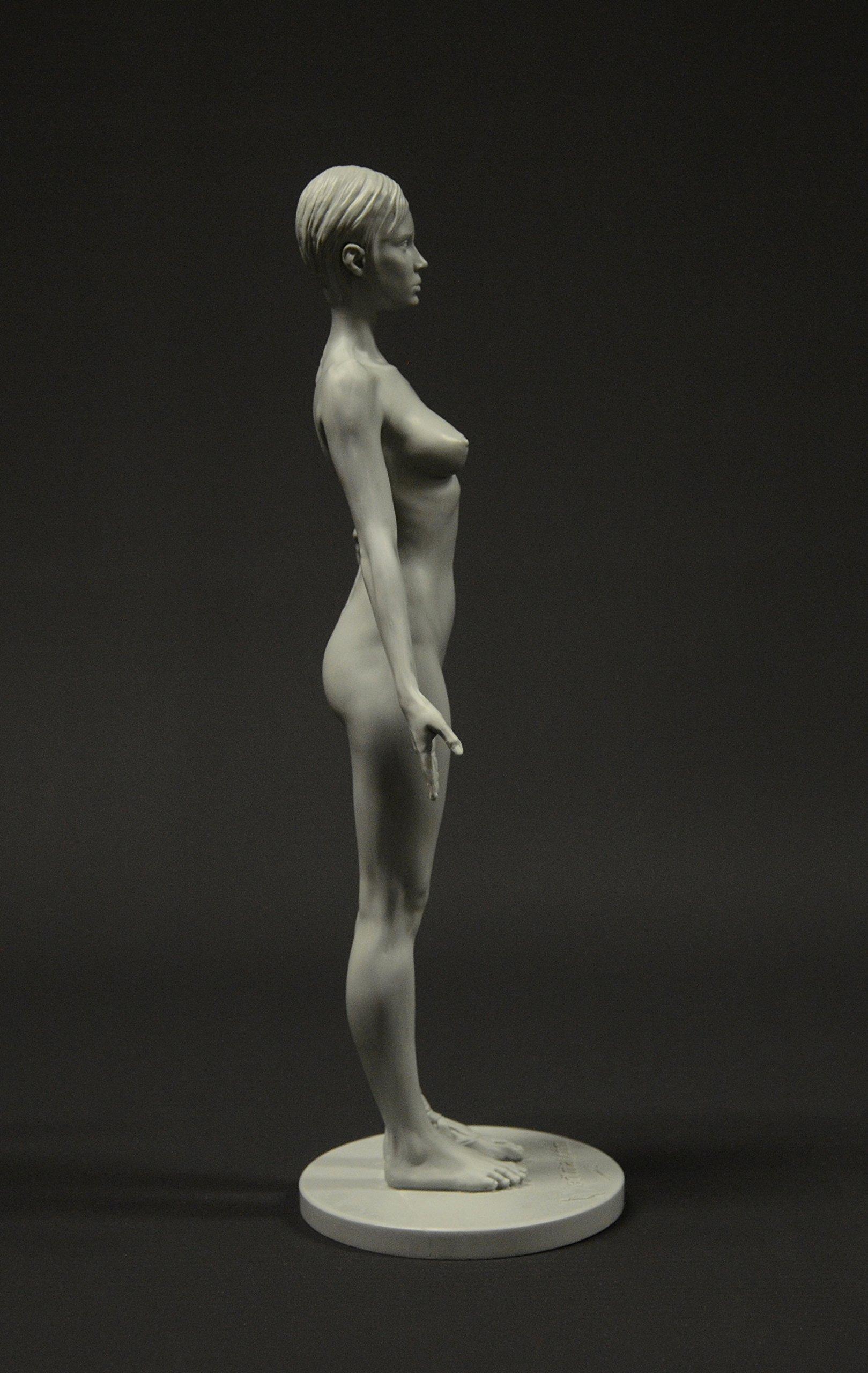 Female Anatomy Figure 105 Inch Anatomical Reference Figure 11
