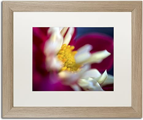 Amazon Com A Different Kind Of Dahlia By Kurt Shaffer White Matte Birch Frame 16x20 Inch Home Kitchen