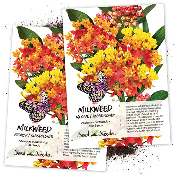 Seed Needs, Bloodflower (Asclepias curassavica) Twin Pack of 100 Seeds Each