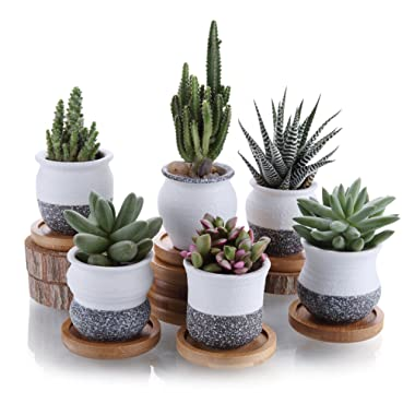T4U 2.25 Inch Ceramic Mini Korea Style Snow Serial Full Set Succulent Plant Pot Cactus Plant Pot Flower Pot Container Planter with Bamboo Trays Package 1 Pack of 6