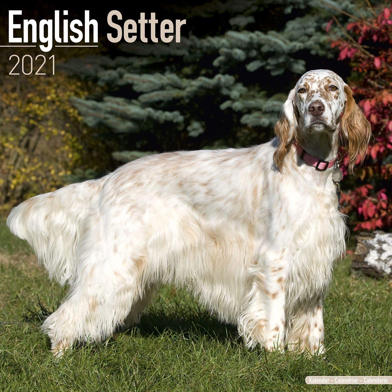 Calendrier Agility 2021 English Setter Calendar   Dog Breed Calendars   2020   2021 wall
