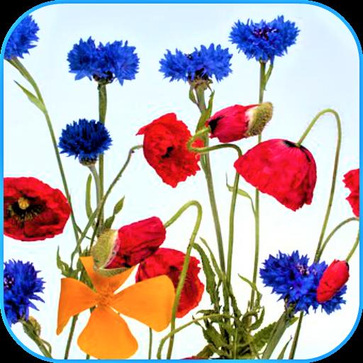 (Wild Flowers Wallpaper)