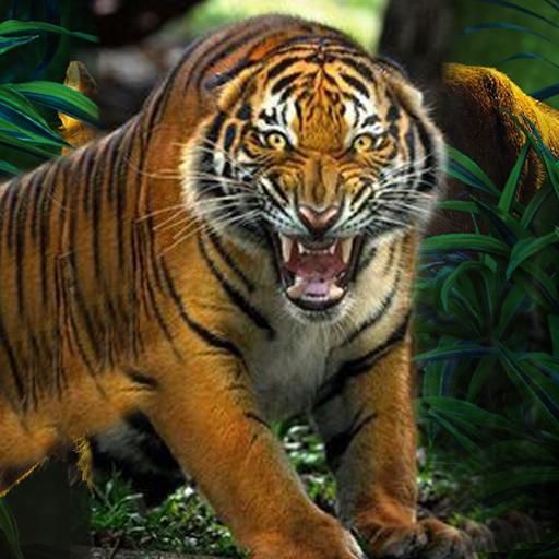 - Wild Tiger Safari Hunting 2017