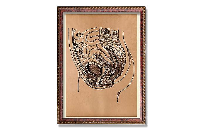 Amazon Human Anatomy Print Female Anatomy Poster Anatomical
