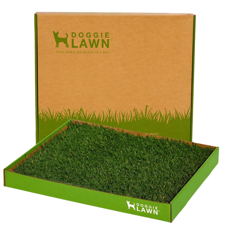 Amazon DoggieLawn Disposable Dog Potty Real Grass