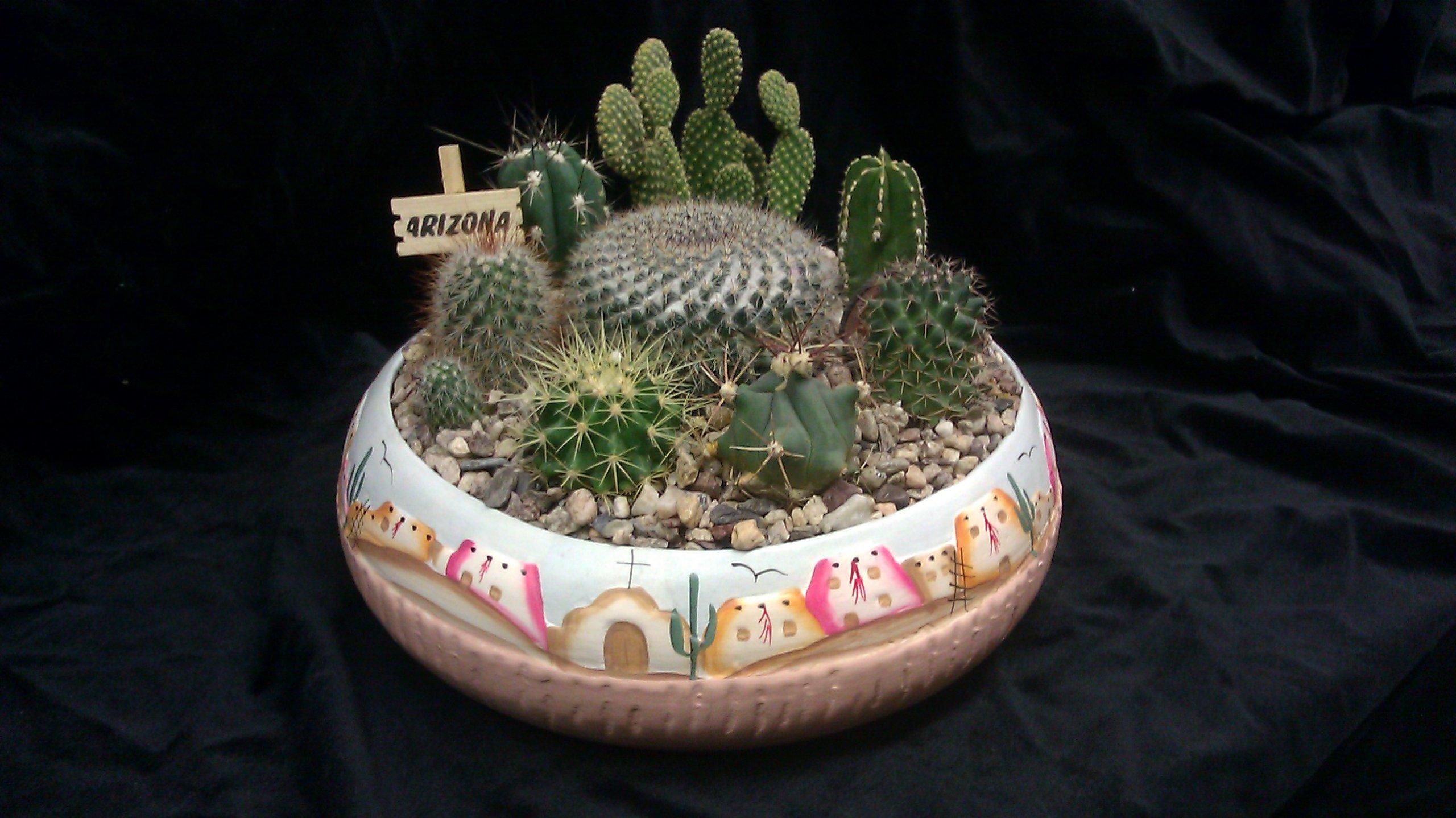 10'' Pueblo Cactus Garden