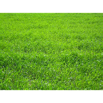 Nature's Seed TURF-LOPE-500-F Perennial Ryegrass Seed Blend, 500 sq. ft : Garden & Outdoor