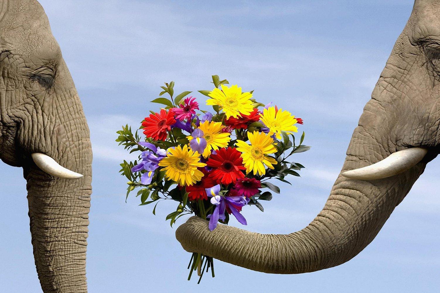 CHOIS Custom Films CF3308 Animal Elephants Flowers Glass Window DIY Stickers 4' W by 3' H