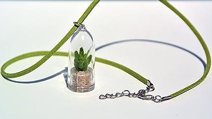 Amazon.com: Planta collar Live terrario Collar de flores ...