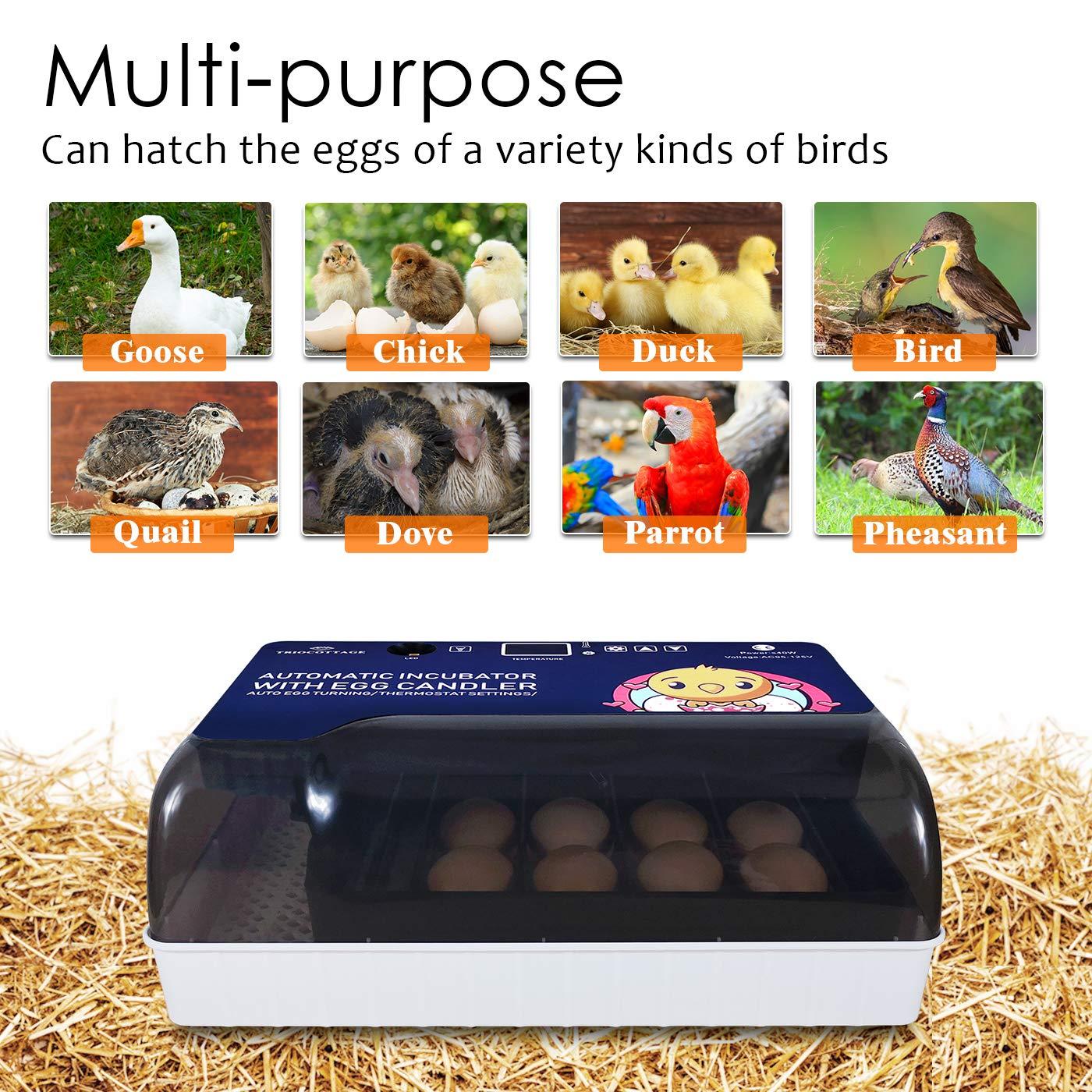 best egg incubators consumer reports