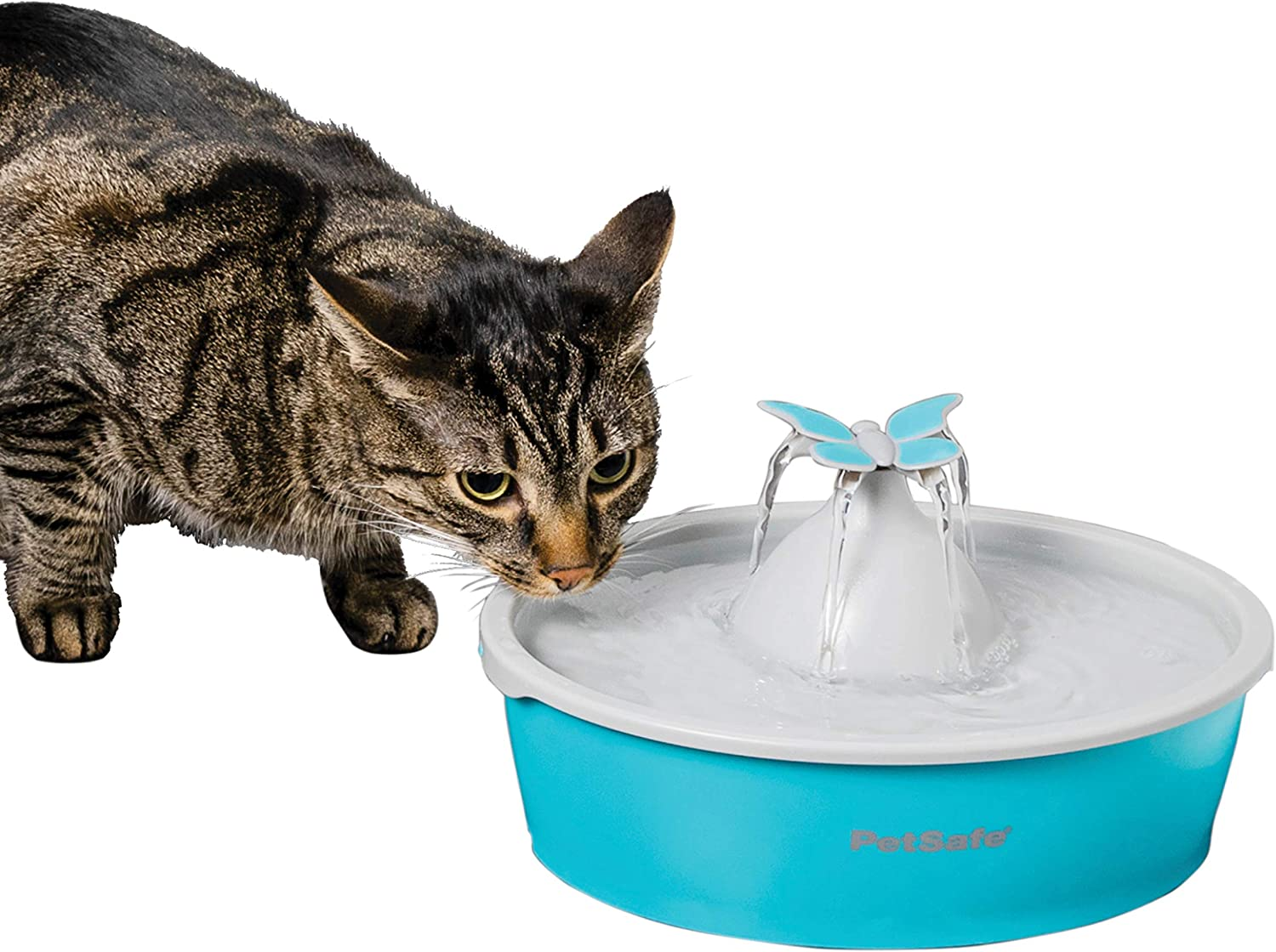 PetSafe Drinkwell Cat and Dog Water Fountain - Butterfly or Original Pet Drinking Fountain - Best for Cats and Small Dogs